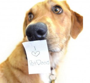 dog with note on their face - how to show your dog love