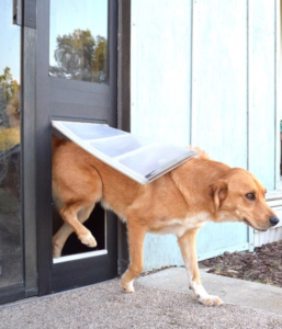 dog door sizes: how to measure dog height to choose the right one