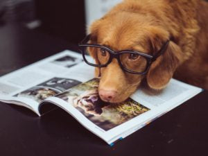 dog with glasses wishes he were a dog with human hands