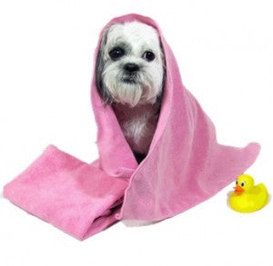 a dog right after a bath - dog grooming 101; how to groom a dog