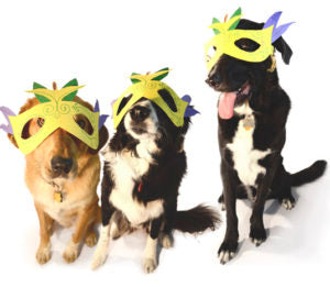 barkus masks like these are quick and fun mardi gras costumes for dogs