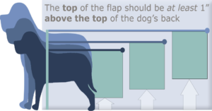 image of a dog;s back being measured in retrospect to the top of the dog flap