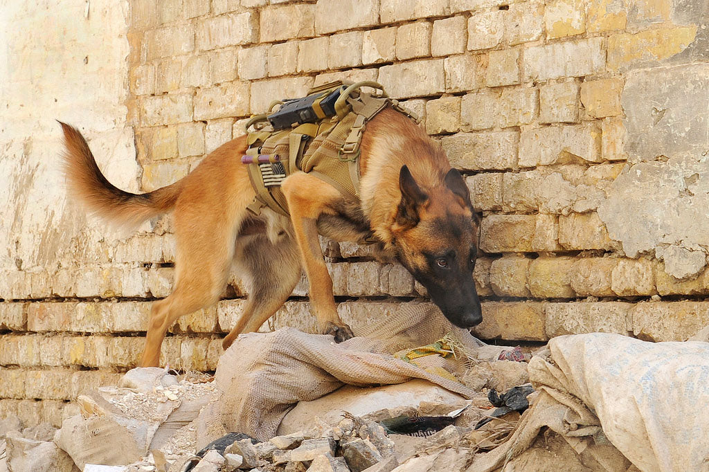 Military working dog handlers help army dogs detect enemies - military dog breeds