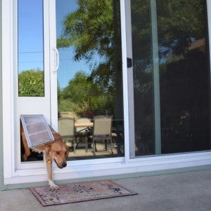 Loki walking outside from inside through an Endura dog door insert - sliding glass door with dog door built in