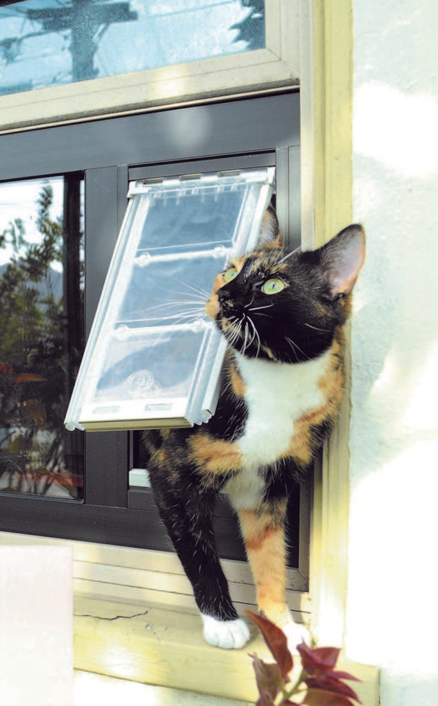 cat worrying about a hair ball - cat hairball remedy and hairball cat prevention