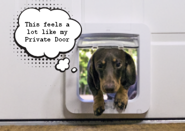 Puppy Weiner coming inside the house through the SureFlap Microchip Dog Door for Small Dogs