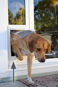A dog stepping through a patio panel pet door. An arrow indicates where the step-over is.