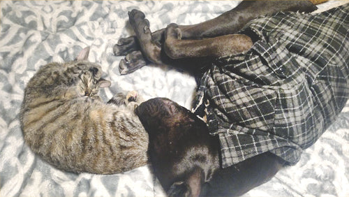 sibling pets sleeping together, using doors for cats and dogs