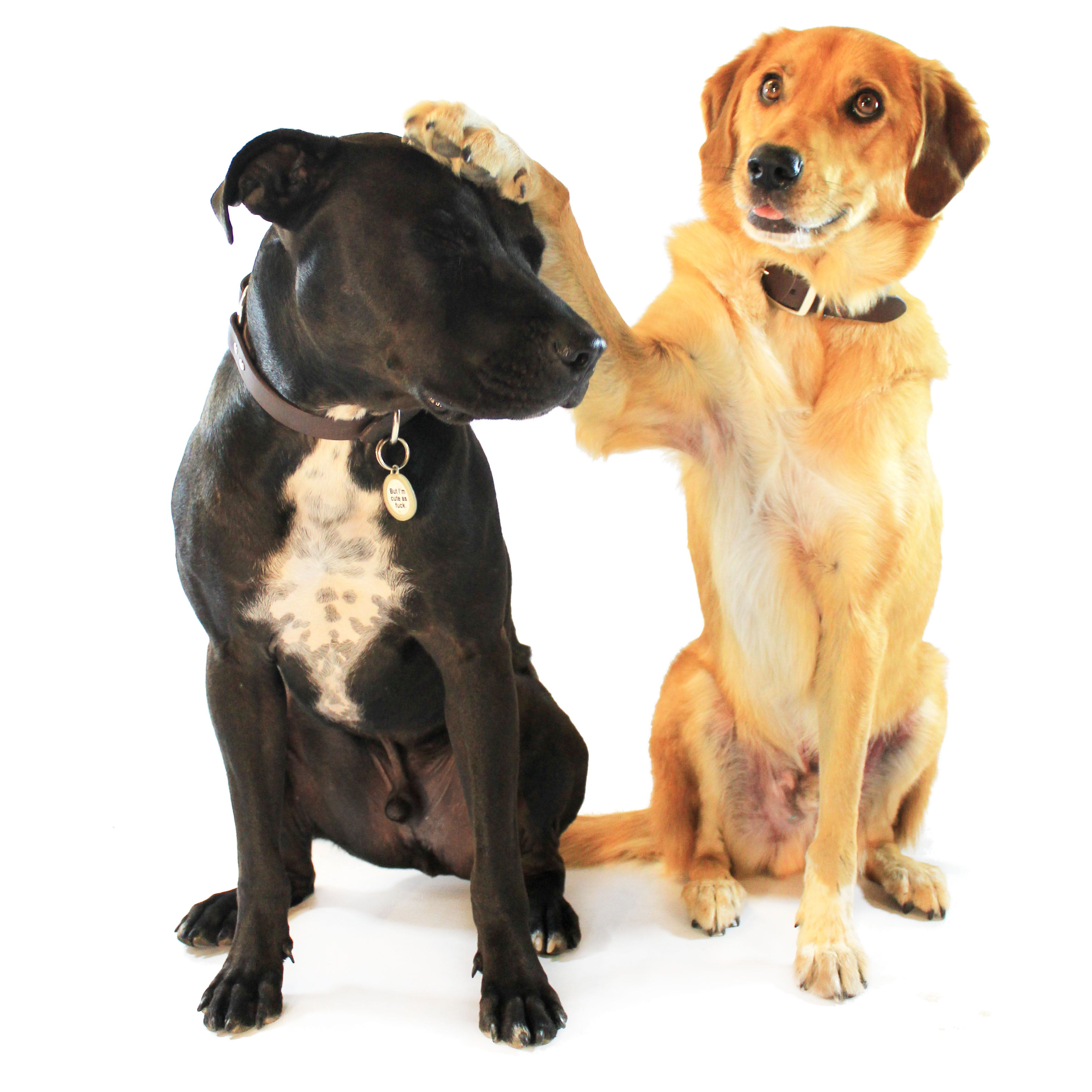 two dogs - how to get dogs to stop barking?
