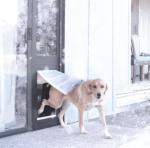 get a winter dog door for your pup and to keep your window dog door from becoming a window draft!