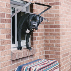 dog using thermo sash - how to install a doggie door - pet door installation