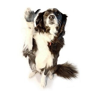 Mikey thinks dogs with hands are super funny - if dogs could talk, would they agree?