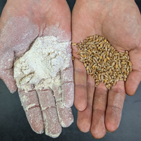 Red Fife Flour (Bread Flour)