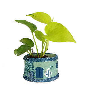 Golden Money Plant - Kraftsdecor