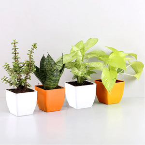 Air Purifying Combo - Kraftsdecor