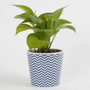 Money Plant - Kraftsdecor