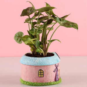 Syngonium Plant in Cute Pot - Kraftsdecor