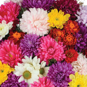 Chrysanthemum Mix Seeds