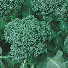 Broccoli calabrese English Vegetable Seeds small pack