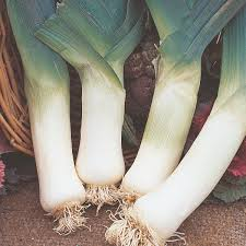 Leek English Vegetable Improved Seeds