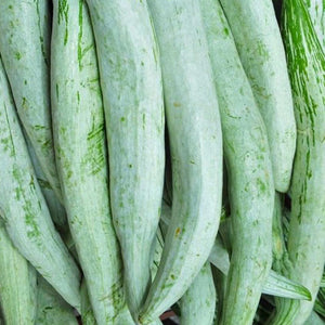 Snake Gourd Chachinda - Desi Vegetable Seeds