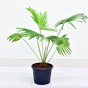 Table Palm - Kraftsdecor