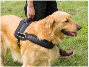 Adjustable Sport No-Pull Dog Harness