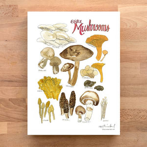Edible Mushrooms Print