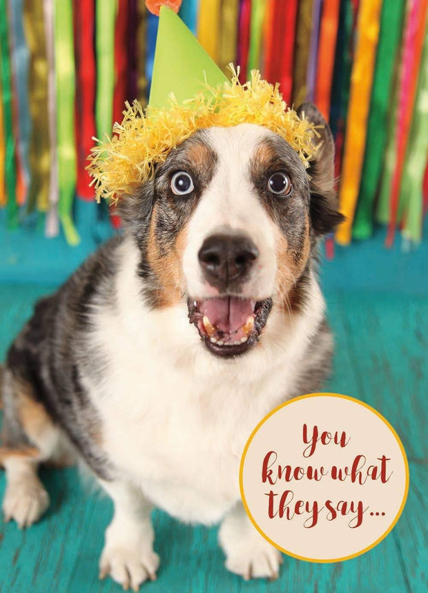 Fiesta Dog Birthday Fun Card | Fruit of the Vine Boutique