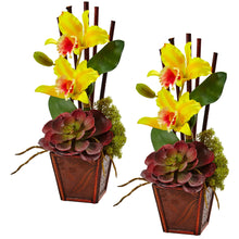 Cattleya Orchid and Succulent Arrangement (Set of 2)