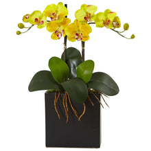 Double Mini Phalaenopsis in Black Vase