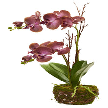 "23"" Chocolate Phalaenopsis Orchid Artificial Arrangement in Twig Basket"