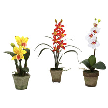 Potted Orchid Mix (Set of 3)