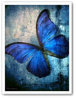 Blue butterfly Wall Art Print