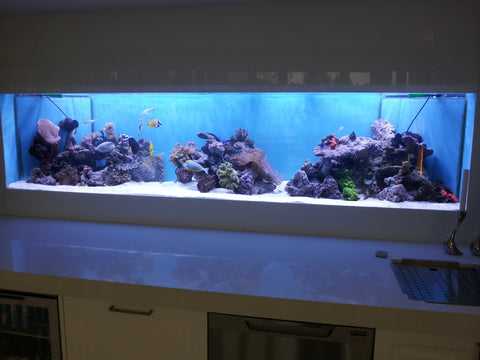 2.5mt Reef aquarium build by Aquatic Creations, as seen on The Footy Show!