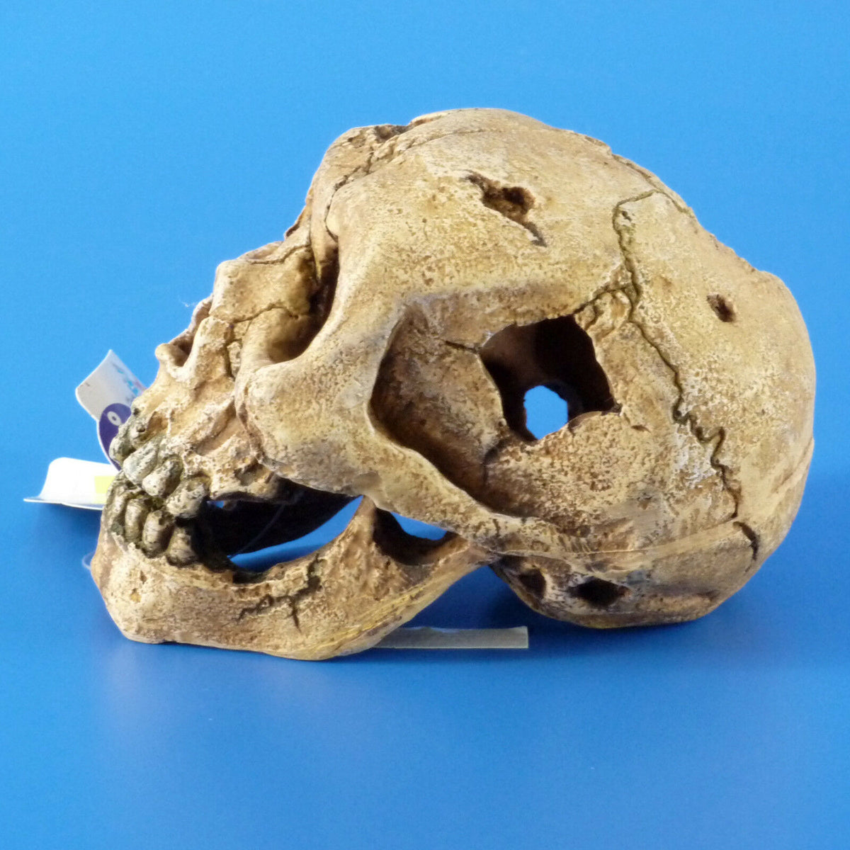New Kazoo Skull Medium Aquarium Ornament