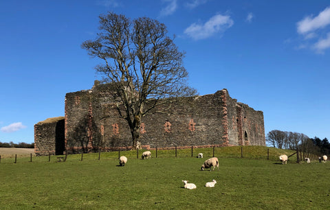 Lambs at Skipness Castle