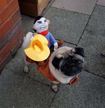 Pug Crazy Riding Cowboy Dog Costume