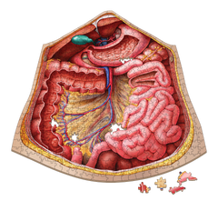 Anatomy Jigsaw Puzzle: Bundle