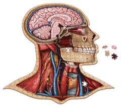 Anatomy Jigsaw Puzzle: Head