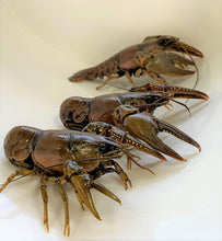 Load image into Gallery viewer, Crayfish
