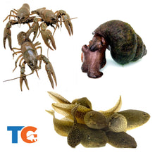 Load image into Gallery viewer, Crayfish, Trapdoor Snail & Tadpole Combo