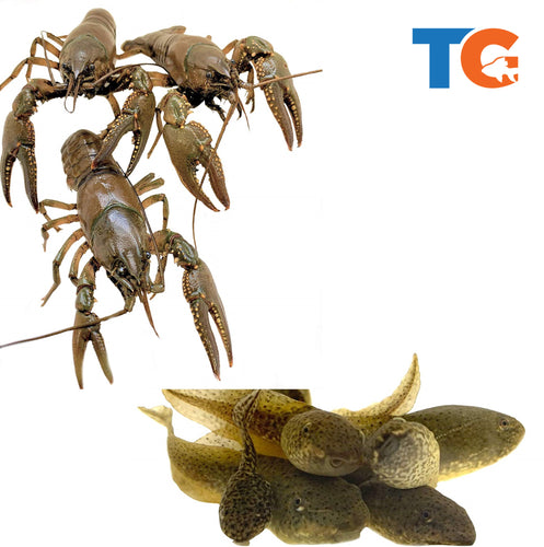 Toledo Goldfish Crayfish and tadpole combo