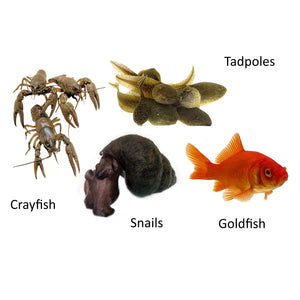 Science kits aquatic creatures