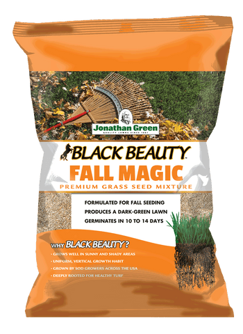 Black Beauty Fall Magic Grass Seed
