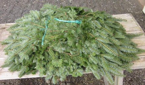 Balsam Fir Bunched Greens - In Stock Now