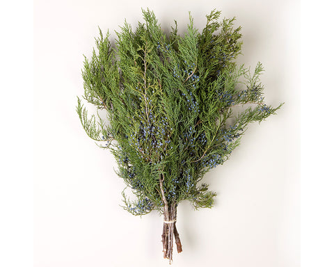 Blue Berried Cedar Bunched Greens
