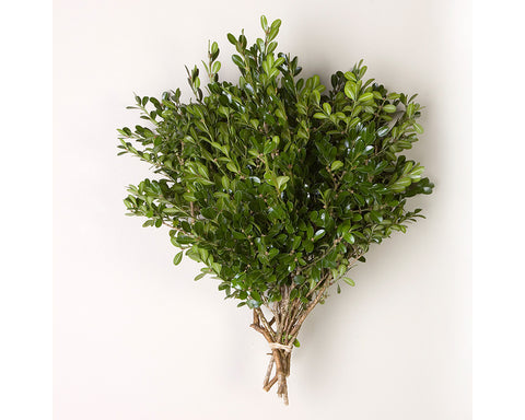 Boxwood Tips Bunched Greens