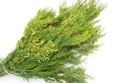 Incense Cedar Bunched Greens