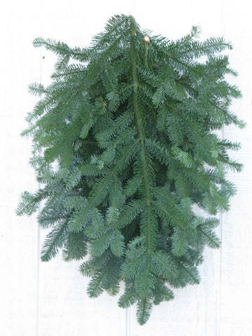 Noble Fir Bunched Greens